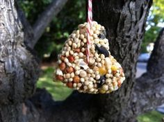 Nut-free bird feeder ideas for getting ready for winter/hibernation themes - make sure nobody has a SEED allergy, though!