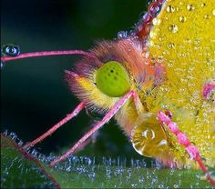 Macrofotografía de Insectos   fotos arte  insectos