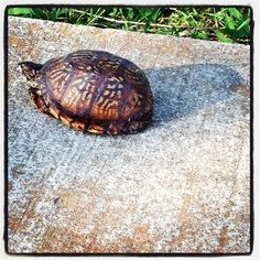Workout: Walk  Date: Jun 7, 2013  Distance: 1.83 mi  Duration: 31:08  Times lapped by turtle: 2