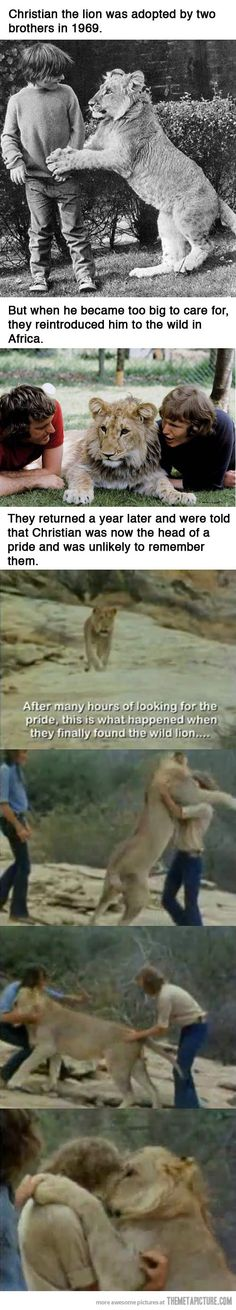 The Story of Christian the Lion. I remember the first time I heard this story/saw this video... Life is good sometimes.