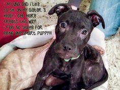 Adoptable Fridays - Luna > via DogShaming.com > what a face!