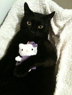 """Beautiful black cat and his/her toy """"baby"""" kitty"""