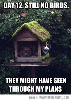 Animals | Humor Devil | Page 10 funny animals, picture day, funny pictures, funny cats, bird feeders, funny images, funny stuff, cat houses, cat memes