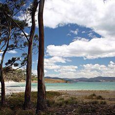 Beautiful Encampment Cove on Maria Island on Tasmania's East Coast.  Maria Island National Park is a short ferry ride from Triabunna, about an hours drive from Hobart. #discovertasmania #mariaisland #eastcoasttas #tasmania Image Credit: Sophia Serēnitās