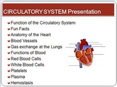 Circulatory System and Blood components PowerPoint for high school ($)