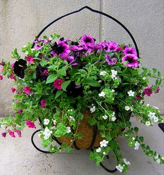 flowers gardens on pinterest hanging baskets petunias and sweet potato vines. Black Bedroom Furniture Sets. Home Design Ideas