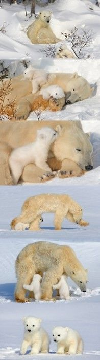 Polar bears, Fuzzy Love