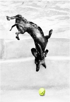 Swimming doxie