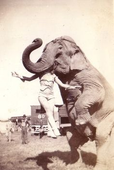 Circus performer with elephant
