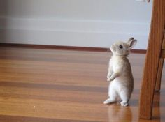 no rabbit in house?  what...why?  I so cute.