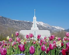 Mount Timpanogos Temple Weddings | lds_temples_mt_timpanogos02.jpg