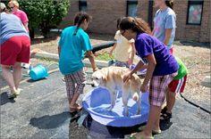 Fundraising Dog Wash, August 2011