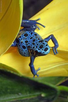 beautiful colorful frog
