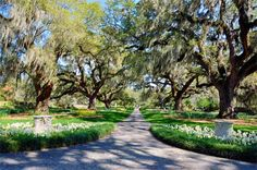 Brookgreen Gardens is one of South Carolina's most beloved landmarks. Located just south of Murrells Inlet in Georgetown County, this historic sculpture garden and wildlife preserve is a favorite destination for locals and visitors alike.