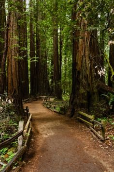 Visit the stunning Muir Woods, a 550-acre National Monument that's home to Coastal Redwoods, some of the tallest and oldest trees in the world. #travel #outdoors magical places, redwood forest, redwood city, muir wood