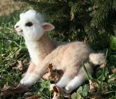 god, real life, toy, babi alpaca, babi llama, lambs, alpacas, baby animals, llamas
