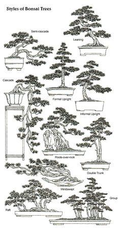 Styles & Shapes of Bonsai Trees