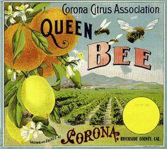 ASLICEINTIME  A SLICE IN TIME Fruit Crate Labels & Other Vintage Art bees, fruit crate, orang, vintage labels, queen bee, crate label, graphics fairy, art prints, vintage art