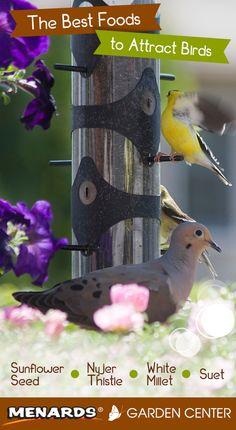 The best foods to attract birds. Read full article: http://www.menards.com/main/c-19062.htm?utm_source=pinterest&utm_medium=social&utm_campaign=gardencenter&utm_content=attract-birds&cm_mmc=pinterest-_-social-_-gardencenter-_-attract-birds
