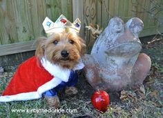 One of our customers wearing a royal pup dog costume!