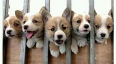 In Jail for Excessive Cuteness