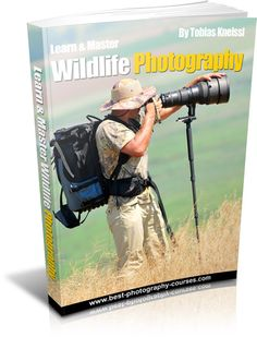 Learn And Master Digital Wildlife Photography