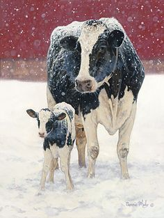 Holsteins in the snow. Awww <3