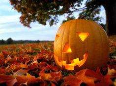 Google Image Result for http://1.bp.blogspot.com/-tNuH0u8bpC8/Tp2rzlYoFGI/AAAAAAAAACM/9ObG0qwCfm8/s1600/pumpkin.jpg