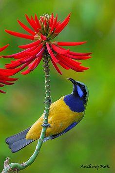 Gorgeous bird