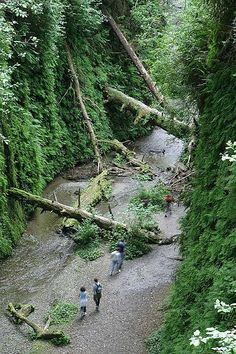 Fern Canyon in Redwood National Park. Yummy.