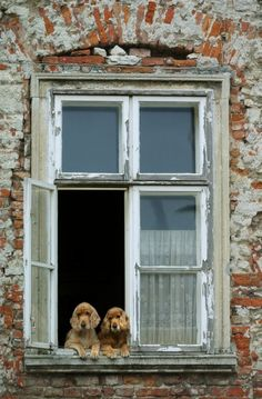 Two dog by the window