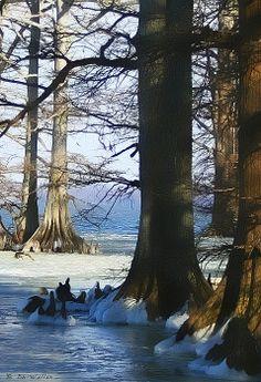 Winter At Reelfoot Lake