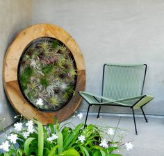 Wow! Love the air plant frame!!