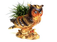 {Air Plant in Vintage Owl Planter} love this!