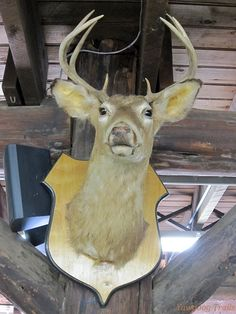 Danny the Deer strikes a pose -- his only pose -- at Camp Three Point's Sharpe Lodge at #Yawgoog.  A 2014 image by David R. Brierley.