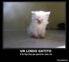 desmotivaciones graciosas de gatos-desmotivaciones-de-gatos.jpg
