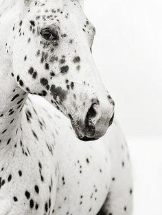 Spots Print By Stephanie Moon//