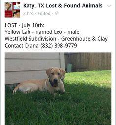 #lostdog #WESTFIELD #KATY #HOUSTON