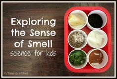 Exploring the Sense of Smell with a Game - A simple hands on way for kids to learn about the sense of smell.