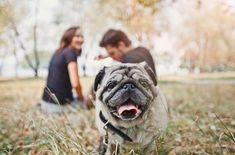 ... collapsed trachea in dogs, what you should know, and what your options