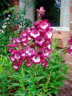Drought Resistant Plants With Vivid Color | Xeriscape Landscaping