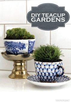 Bring your garden right into your kitchen with these crafty DIY Teacup Gardens!