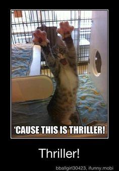 Kitty doing the Thriller dance? Haha