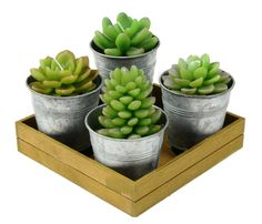 Potted Succulent Candles