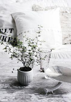 grey interiors, white design, pillow, potted plants, white decor, cushion, pot plants, gorgeous gray, french style
