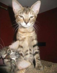 kitty photo bomb