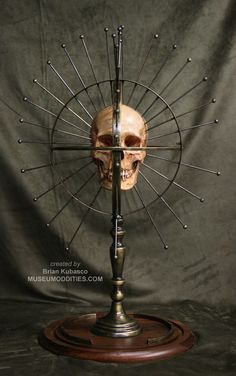 Craniometer -an instrument for measuring the human cranium or skull