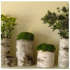 Birch stumps used as planters. Beautiful!