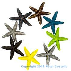 starfish cabinet, cabinet knobs