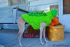 Sweet Pea Halloween Dog Costume -- Tales and Tails